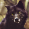 foreverwingless's avatar