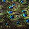 forgottenfeather's avatar