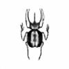 Formalion's avatar