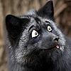 Fox16Art's avatar