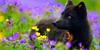 foxesmeadows