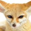 foxseeds's avatar