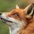Foxy3334's avatar