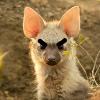 FoxyenaArts's avatar