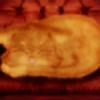 FoxyM8's avatar