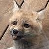 FoxyTheGamer14's avatar