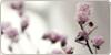 FragileNature's avatar