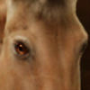 freeBWequine's avatar