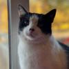 fretikku's avatar