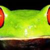 FriendlyPineapple's avatar