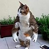 frikijfons's avatar