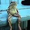 Frogsitting's avatar