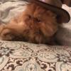 FrostyFlankz's avatar
