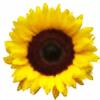 FruitFarm's avatar