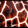 fsuseaangel's avatar