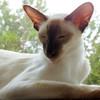 Fuchsieyolo's avatar