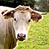 fuhbaer's avatar