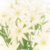 FukkatsumiMori's avatar
