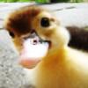 FuzzyDucklings's avatar