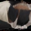 Fynes's avatar