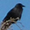 GA-Stock's avatar
