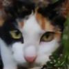 Gaaragirl667's avatar