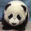 Gadget-Panda's avatar