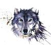 GalaxyWolfWorld's avatar