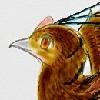 Galliraptor's avatar