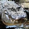 GatorsAreAwesome's avatar