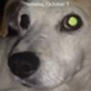 Gattaiphill's avatar