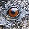gazelsera's avatar