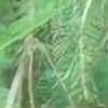 geckobird's avatar