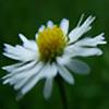 gemz76's avatar