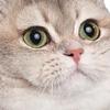GeneOakley's avatar