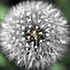 Geonglic's avatar