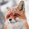Geouple's avatar