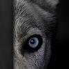 GiuseppeCuozzoPhoto's avatar