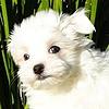 Glen61's avatar