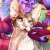 GlitteredKitten's avatar