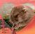 glumpot's avatar