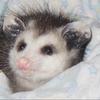 GnomeKween's avatar