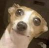 godzilla199999's avatar