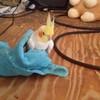 gojirafan2019's avatar