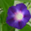 goodmorninglory's avatar