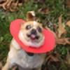 goodoo4andmore's avatar