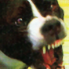 googlemeister's avatar