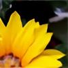 gorgonzola357's avatar