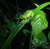 Gow009's avatar