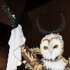 GP-Owl-Queen's avatar